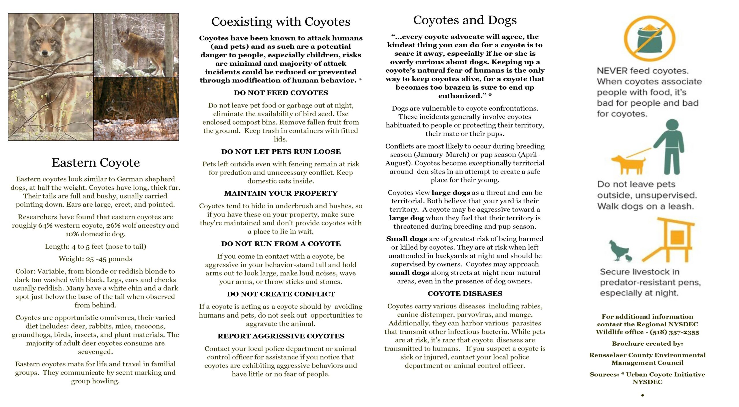 Coexisting with Coyotes